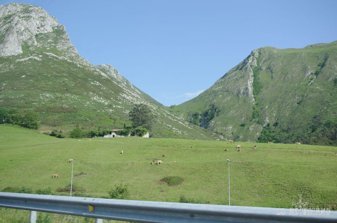 Pastos en Ribadesella, a la altura de la A8.