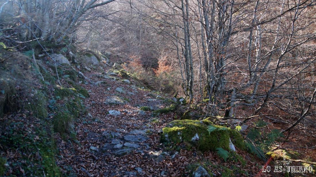 Camino de la peña Caniecha, por este precioso camino.