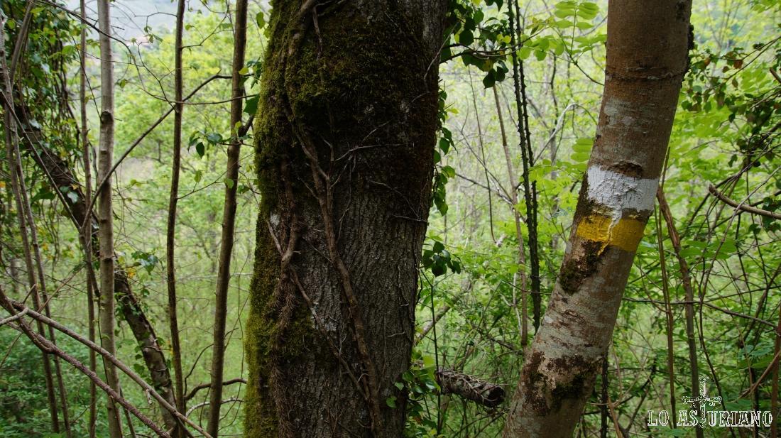 El marcado de la ruta PR del valle de Ponga es impecable.