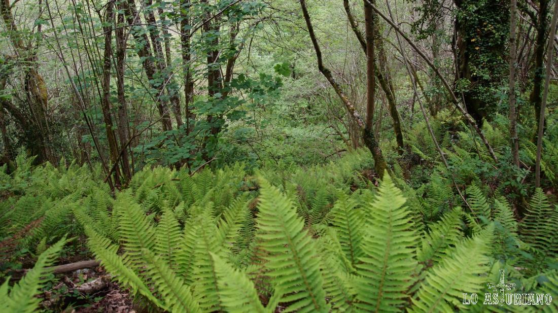 Frondosidad de los bosques de Ponga.