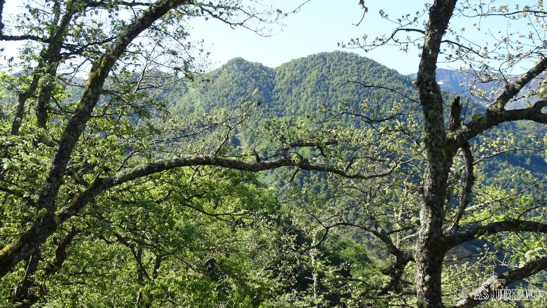 Los preciosos bosques verdes del Parque Natural de Redes, en primavera.