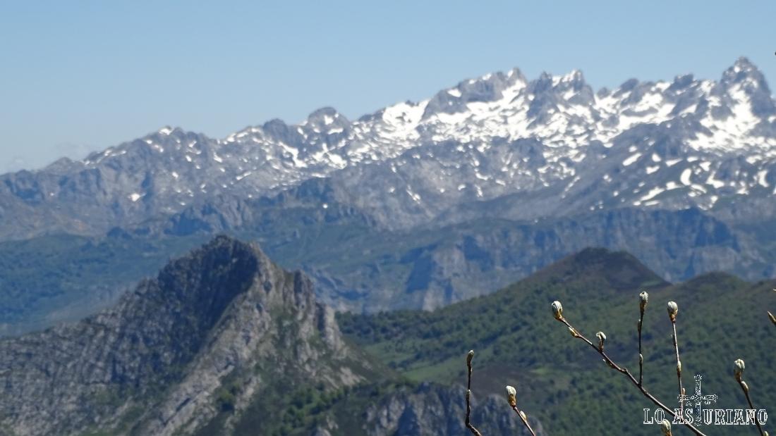 Los Picos de Europa, nevados en sus cimas, y el Recuencu, en primer término y a la izquierda.