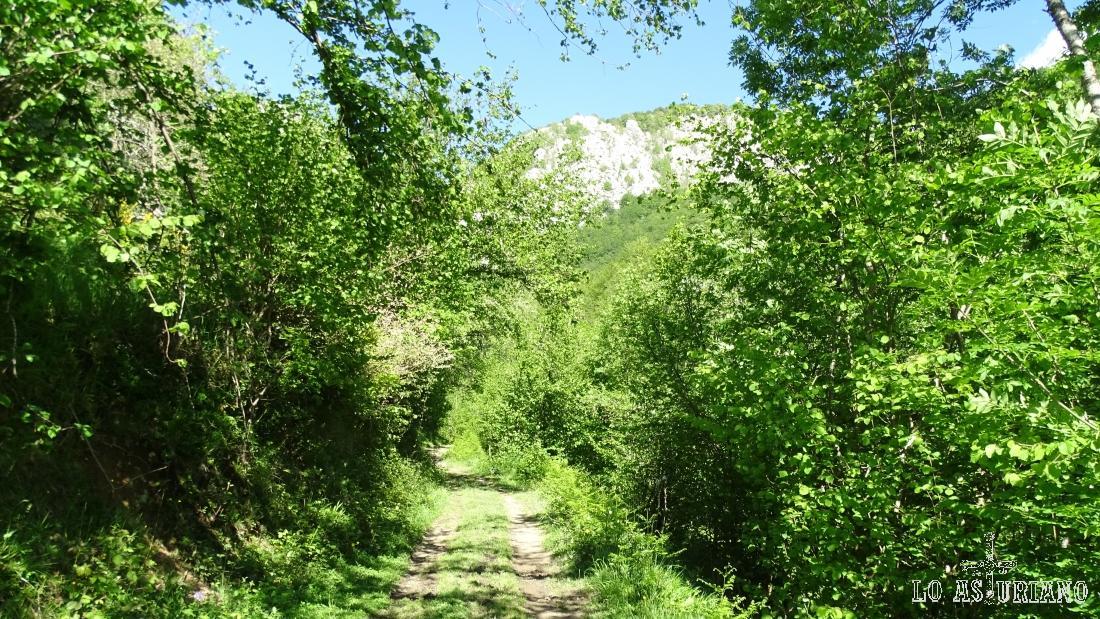 El camino en primavera está espectacularmente rodeado de verde.