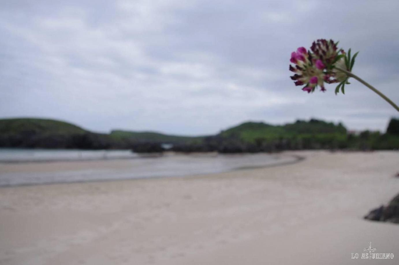 Foto en la playa de Barro, en Llanes.