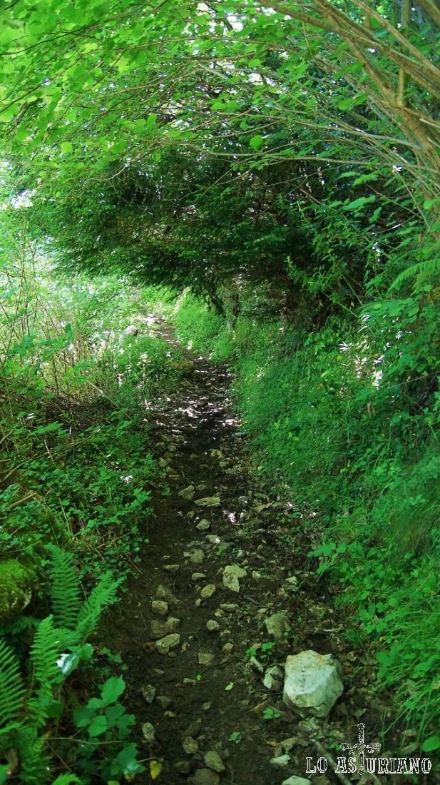 Camino, empedrado en algún tramo, que sube de Cuevas a la braña de Cuevas.