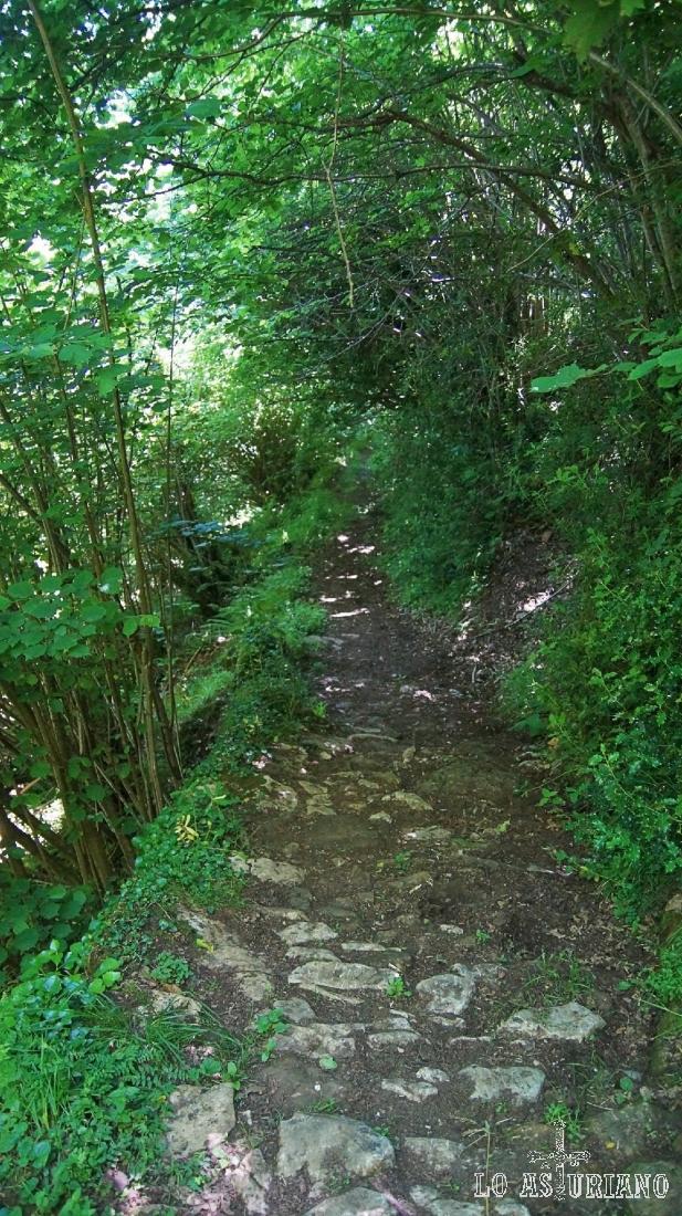 El caminito está en parte empedrado, es el típico camino empinado a brañas de Asturias.