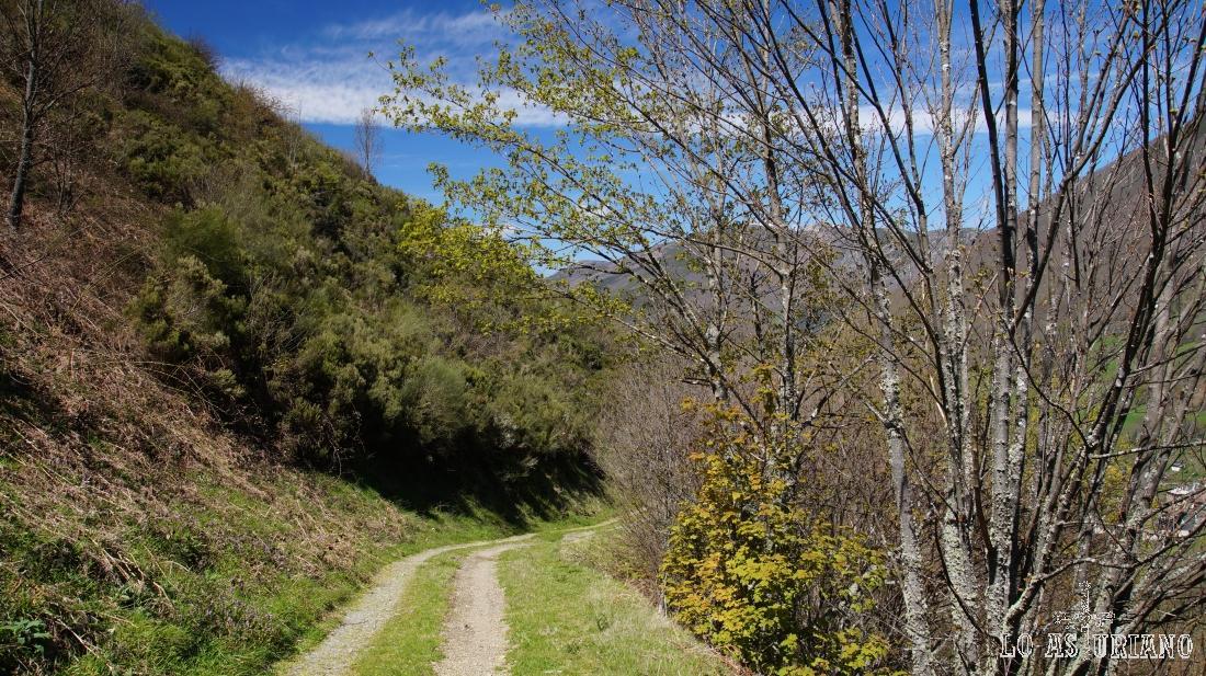 El camino llega hasta Linde la Oveja y más adelante hasta las brañas de Antolín.