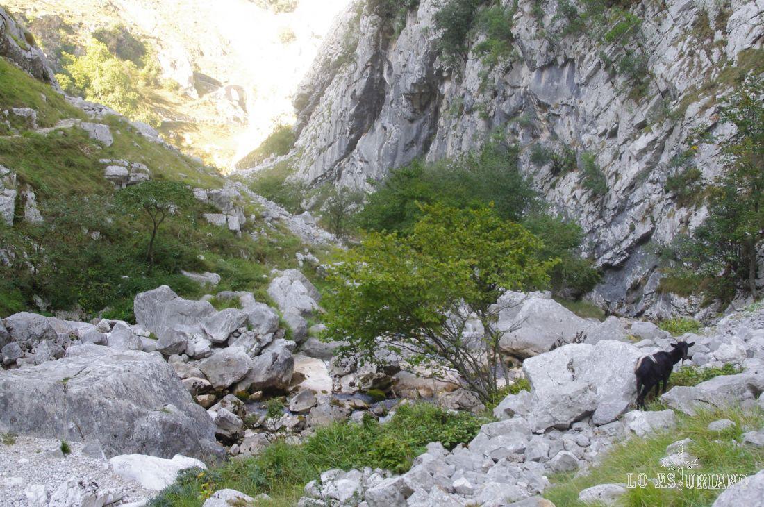El río Tejo, o Texu en asturiano.