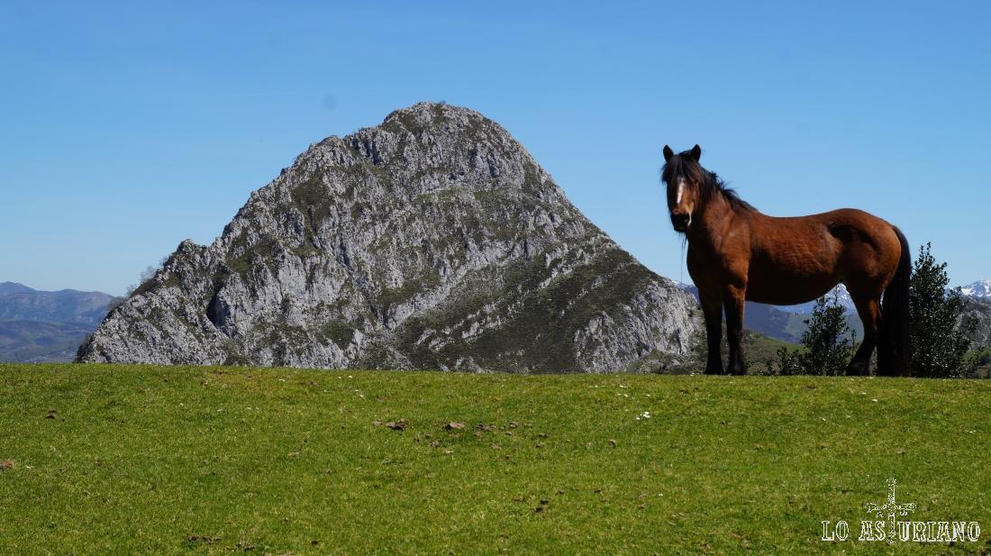 Caballo y el pico Corbellosu al fondo.