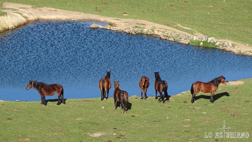 Caballos en los prados, junto a la laguna de Aranga, Ponga, Asturias.