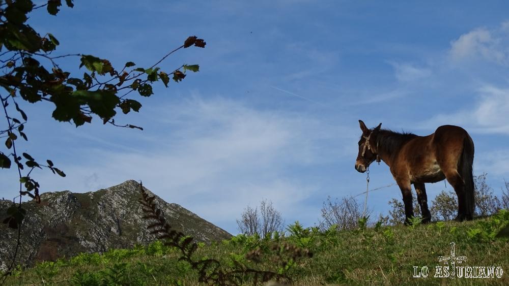 Burro y la cima del pico Pierzu.