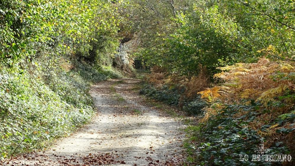 Camino que nos sube hasta la cantera y luego, por senda, podemos llegar hasta el Pierzu.