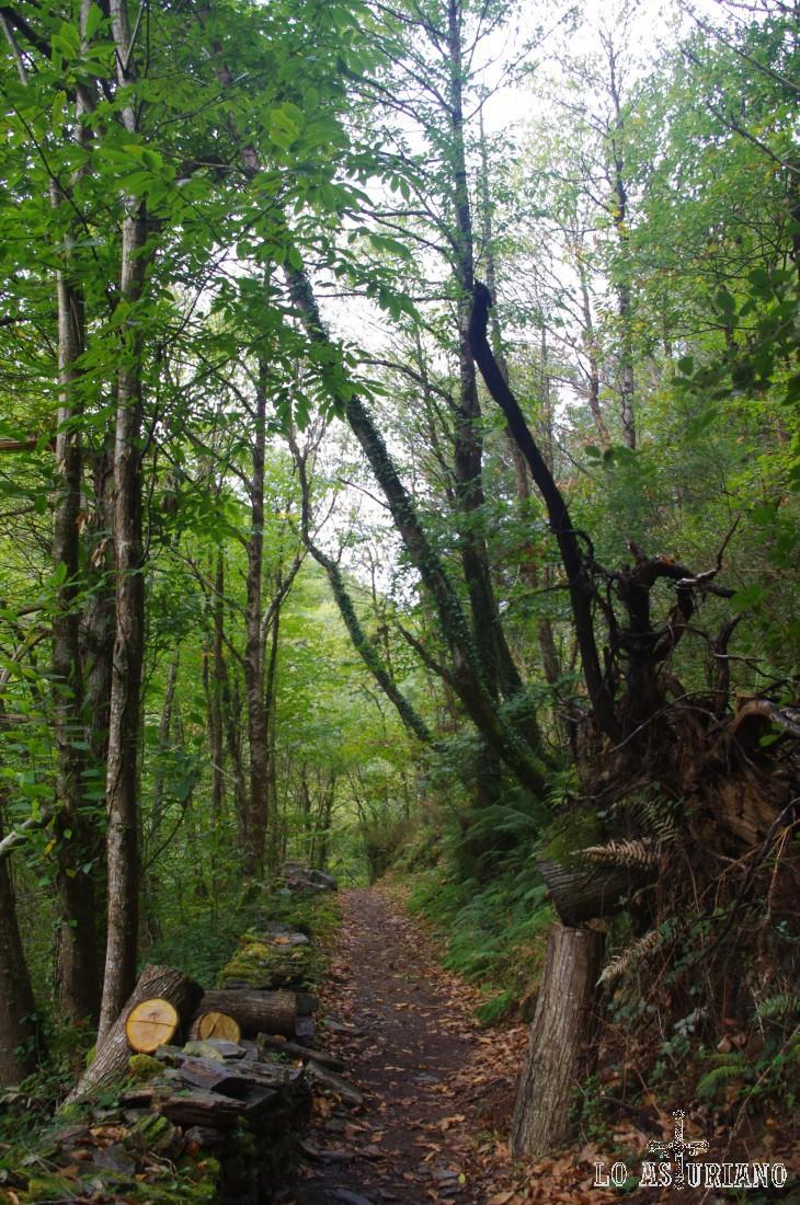 El camino no tiene pérdida. De momento acompañados por árboles y más adelante, acompañados también por el arroyo de la Salgueira.