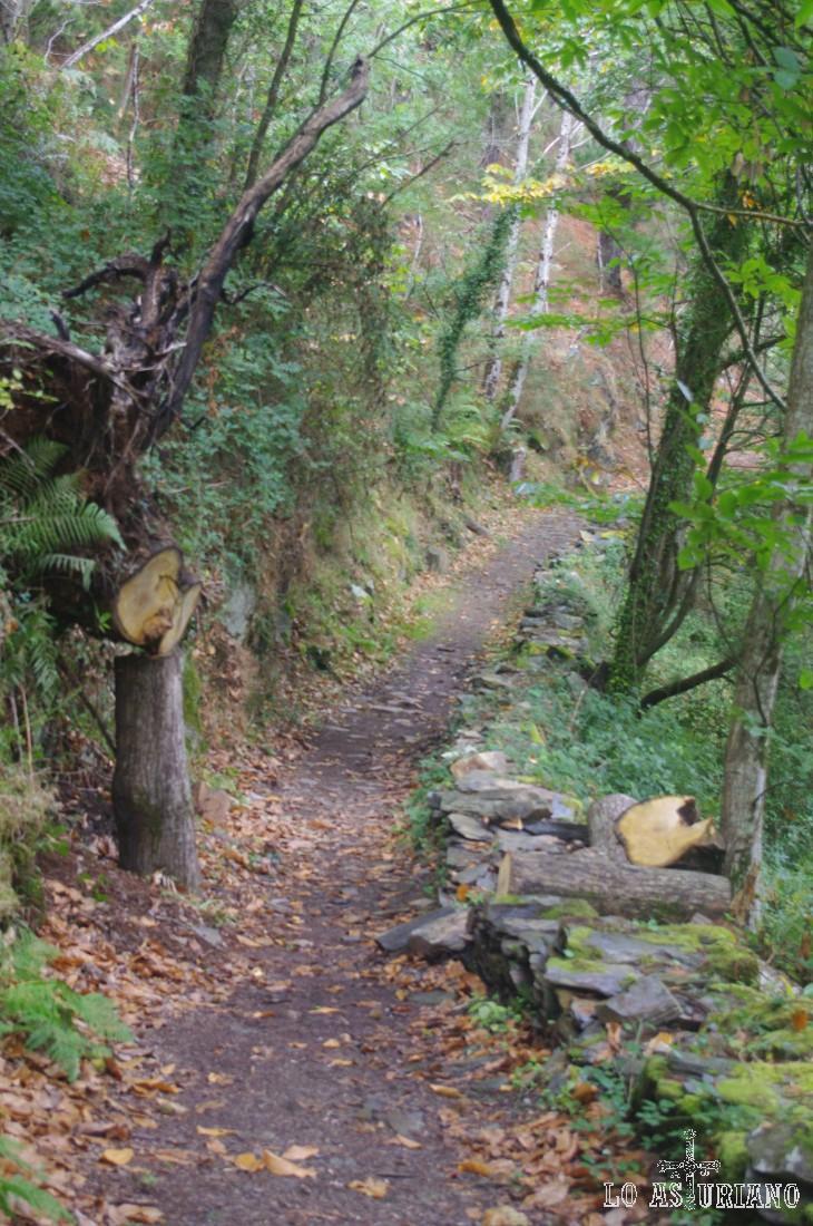 Camino de la cascada de la Salgueira.