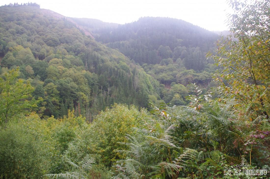 Frondoso bosque llegando a la preciosa aldea de Esquíos.