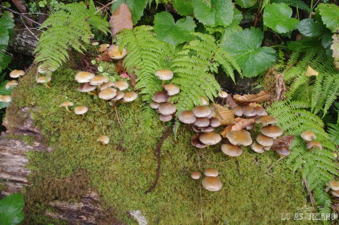 El camino nos ofrece un paraíso para los micólogos.