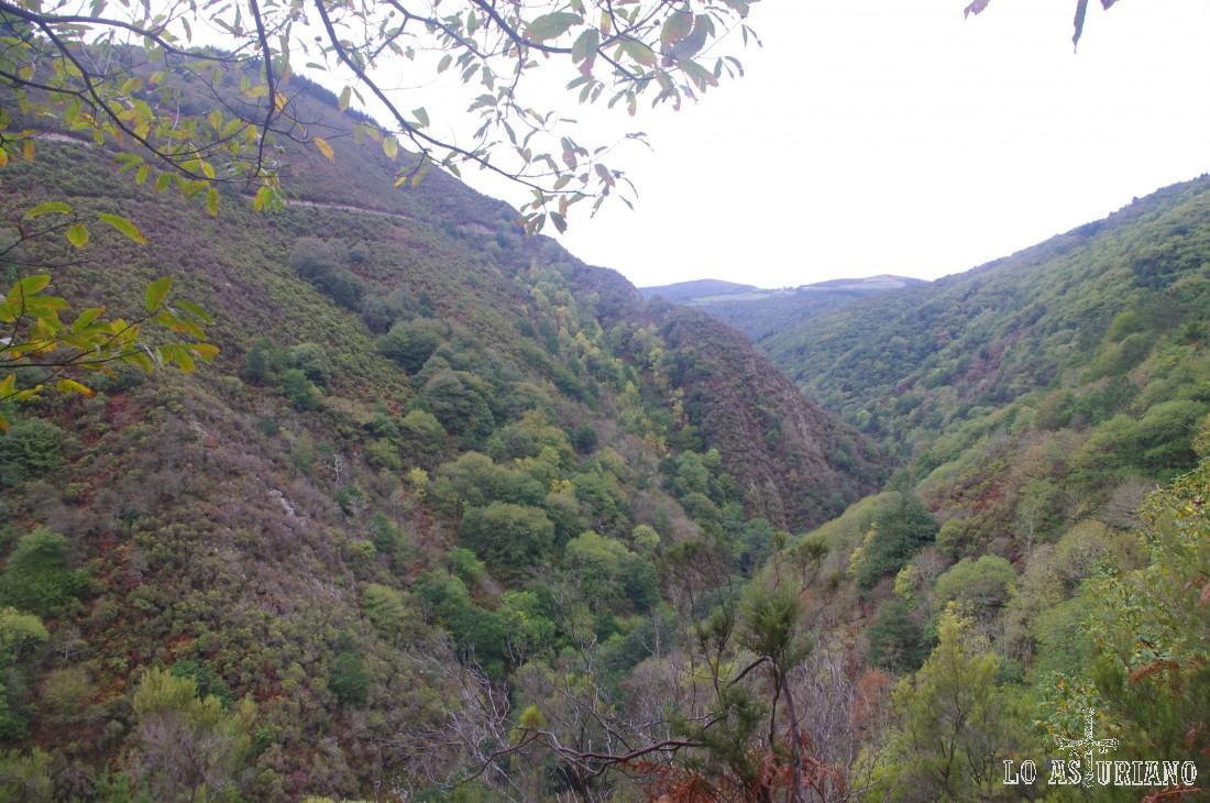 Bosques en el valle del río Turía, entre Esquíos y As Veigas.