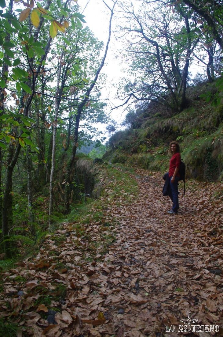 Senda en la ladera del Pico do Corno.