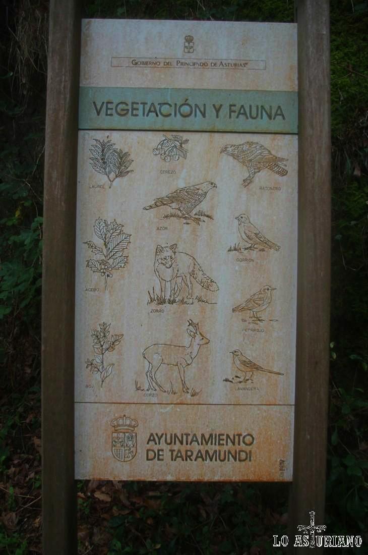 Pancarta que nos indica lo más destacado de la flora y fauna de este precioso entorno: boj, cerezo, acebo y laurel. Halcón ratonero, azor, zorro o corzo.