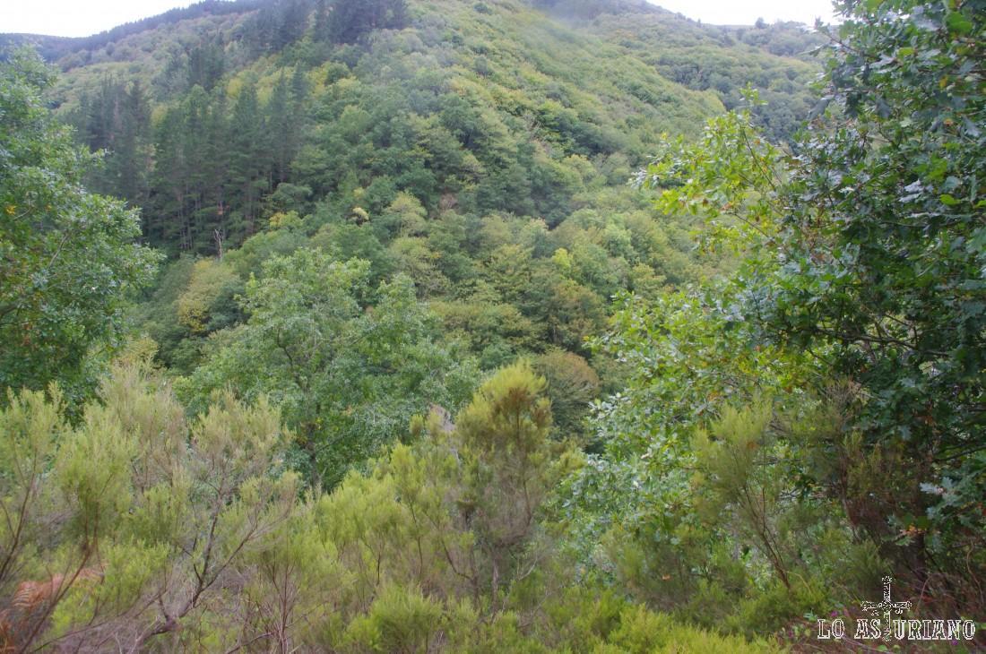 Bosques del valle del Turía en As Veigas. Puro paraíso.