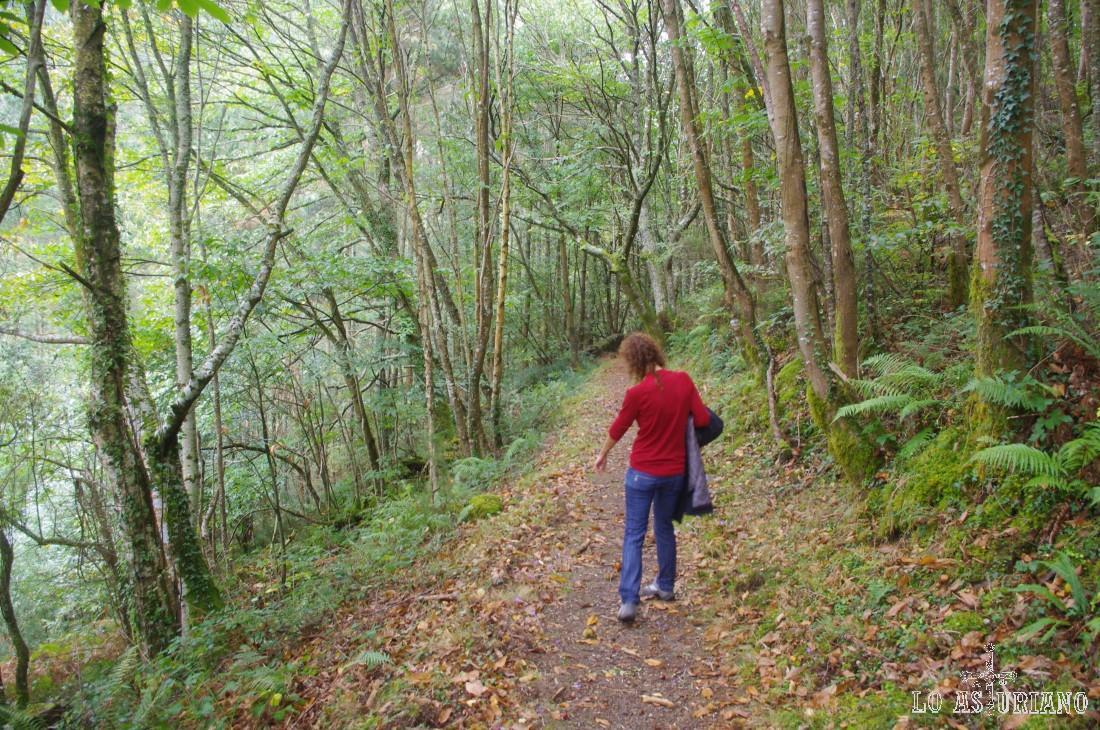 Retomamos la estupenda senda, en bajada hacia Teixois, de nuevo, repleta de setas.
