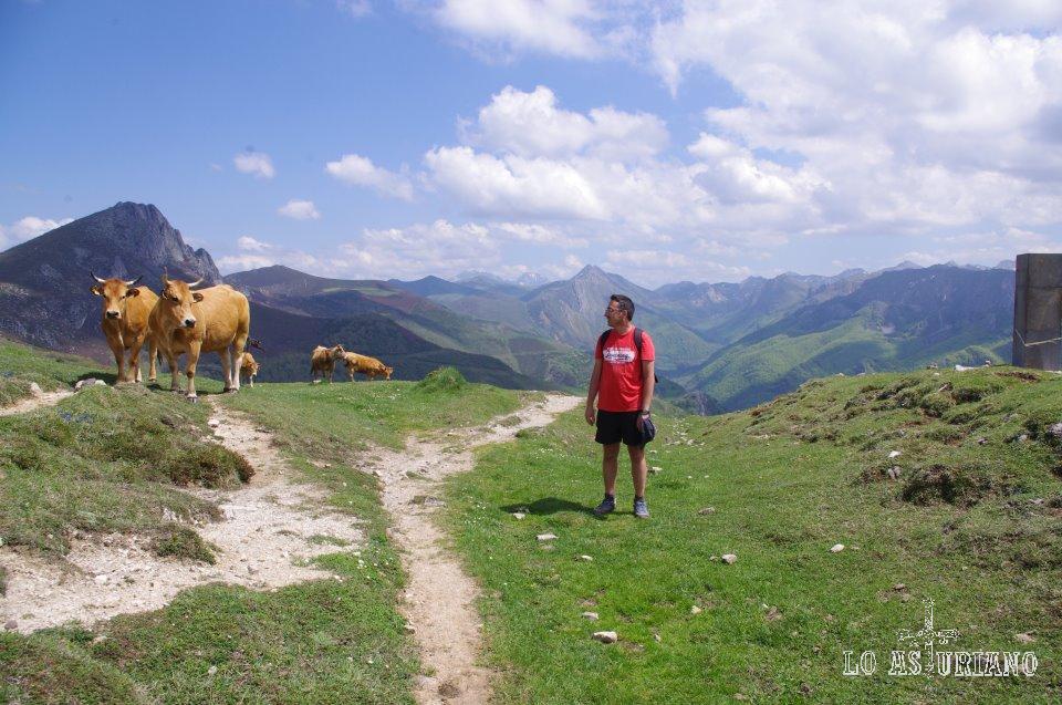 Vacas en el camín real de la Mesa, antes de llegar al maravilloso valle de Saliencia, a la braña de la Corra.