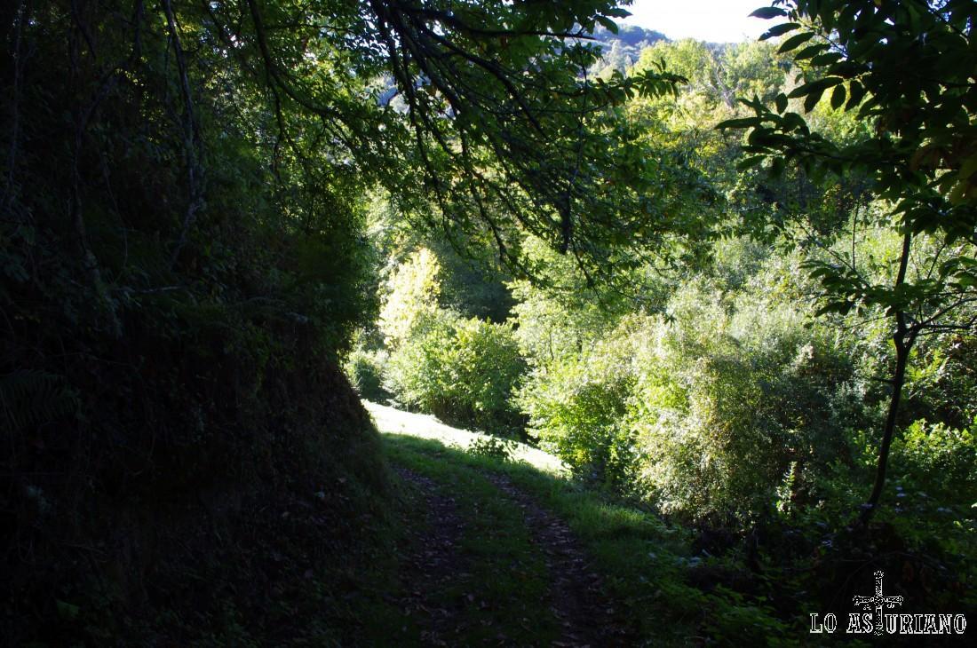 Los primeros kilómetros de la ruta son sencillos, sin casi desnivel; seguimos caminando entre castaños.