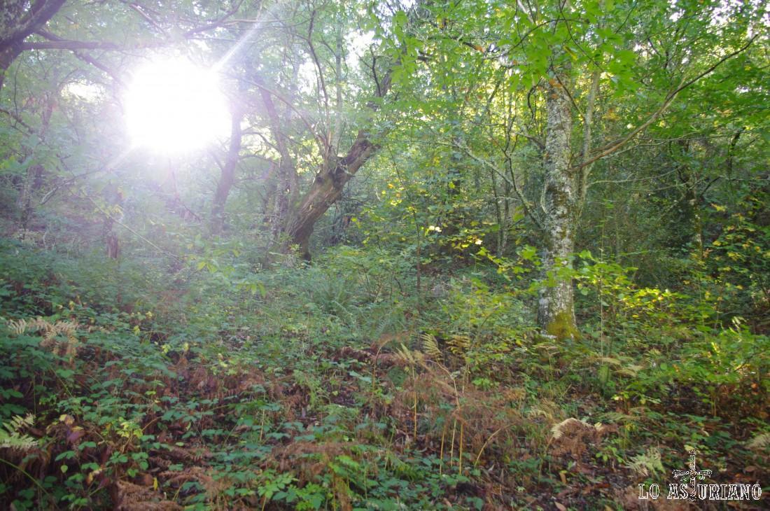El fuerte sol de este día de otoño se cuela en el bosque.