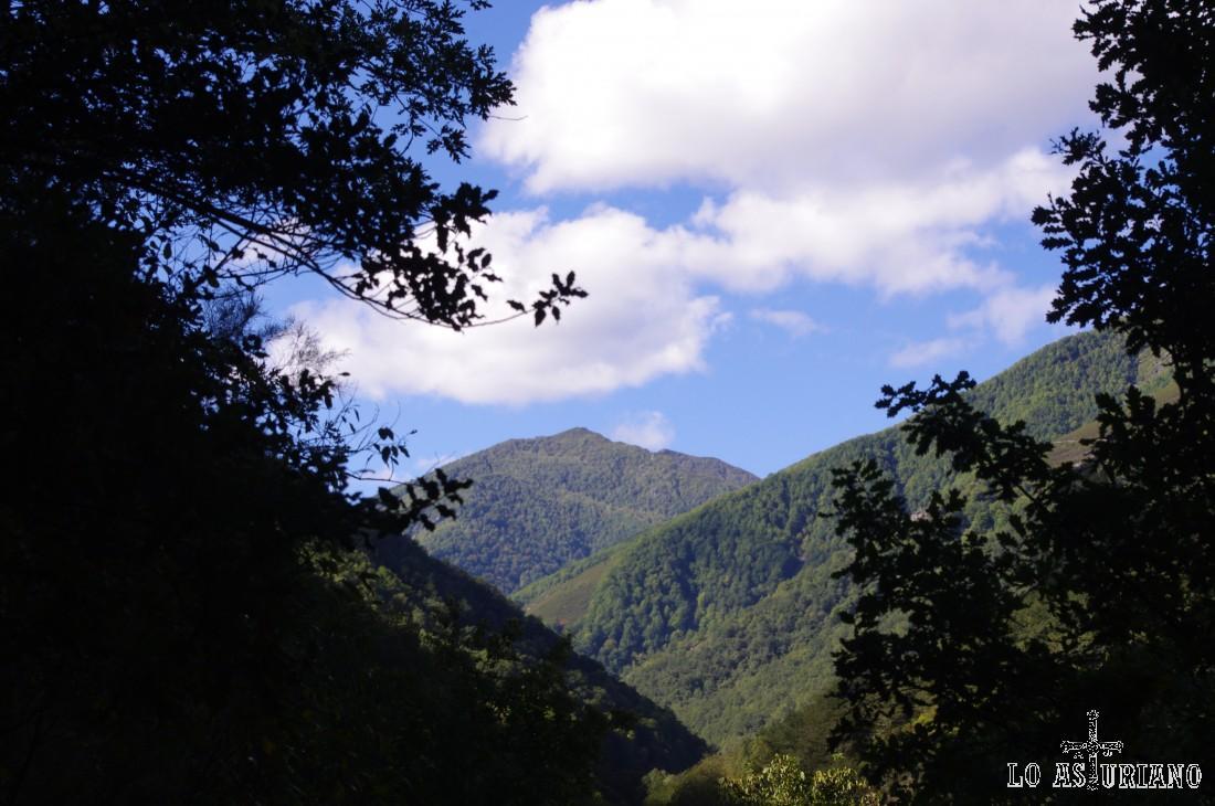 El bosque se abre, volvemos a la senda, paralela al valle del río, y al fondo, podemos ver ya el bajo Muniellos.
