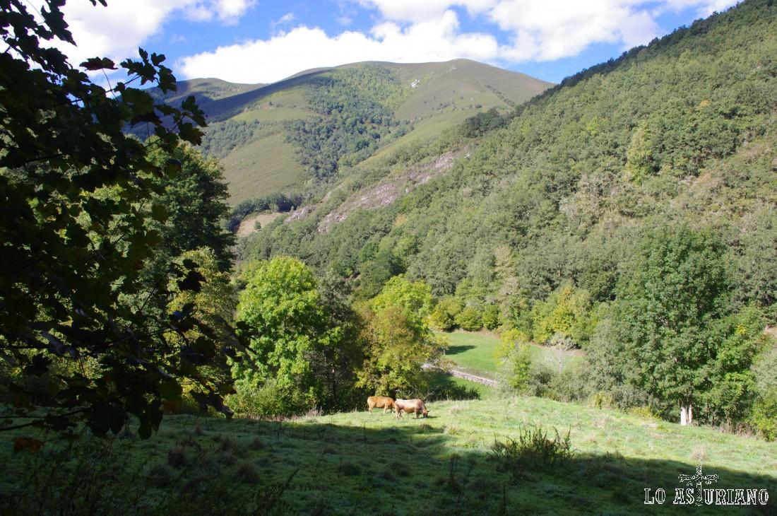 Praus Fondeirus, donde puedes ver vacas pastando y algún cortín, empleado para que los osos no se coman la miel.
