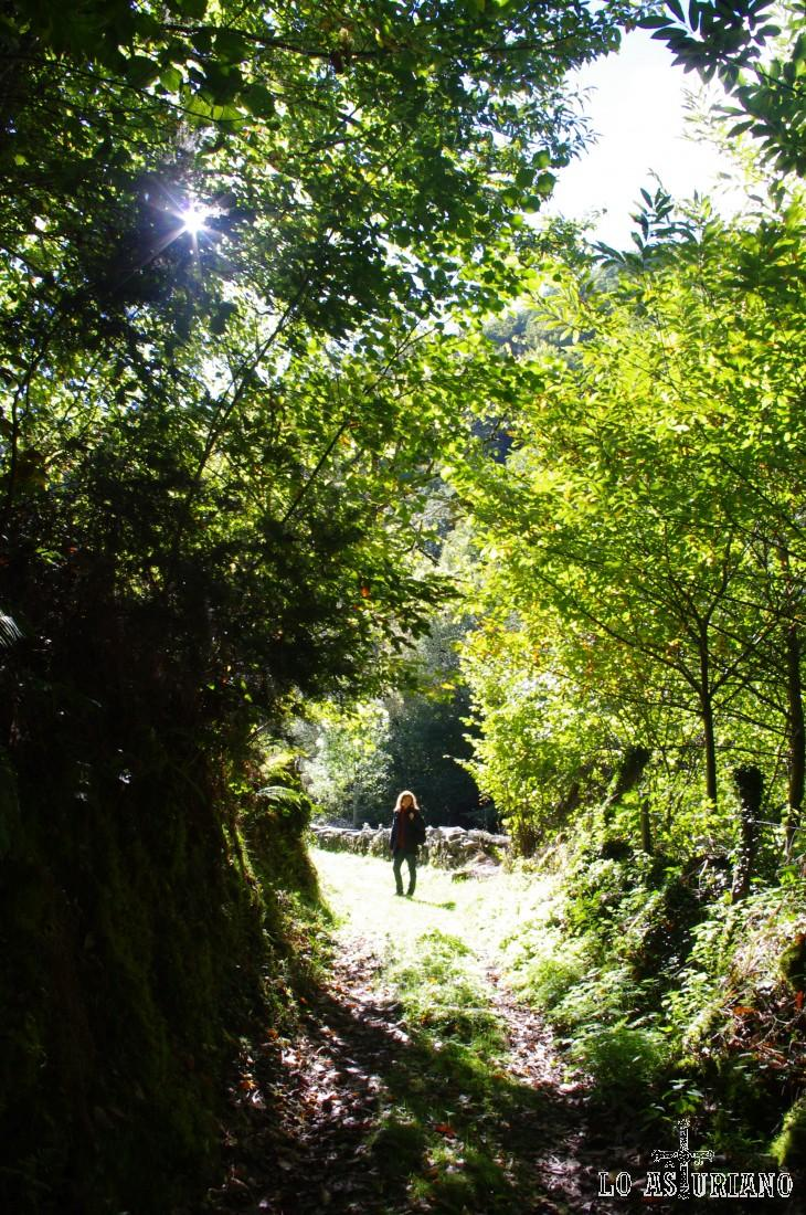 El bosque es muy denso. Hemos caminado ya más de 3 km.