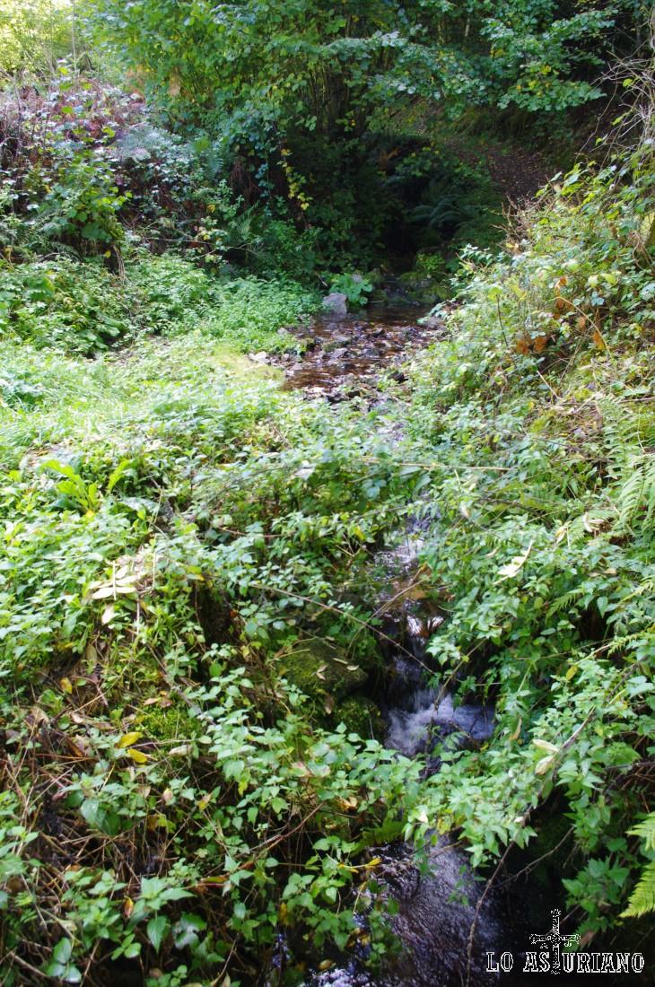 Regato en el bosque de Moal.