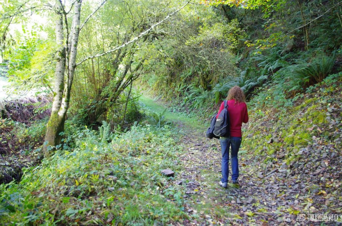 El bosque de Moal se encuentra dentro del Parque Natural de Fuentes del Narcea, Degaña e Ibias. La localidad de Moal ocupa la margen izquierda del río Muniellos/Tablizas, a unos 2 Km de su desembocadura en el río Narcea.