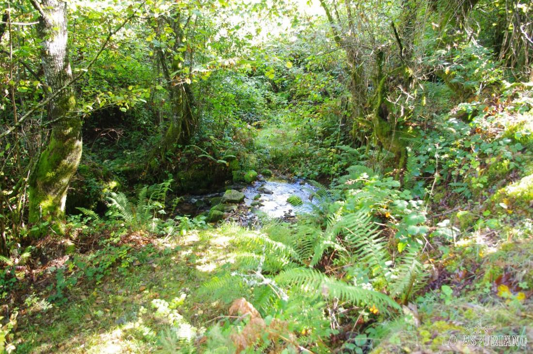 En la ruta del bosque de Moal encontrarás regatos y pequeños riachuelos, que a veces inundan la senda.