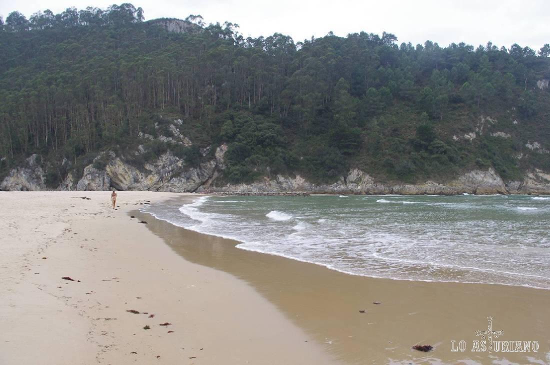 Bosque de eucaliptus al borde del mar, en la playa de La Franca.