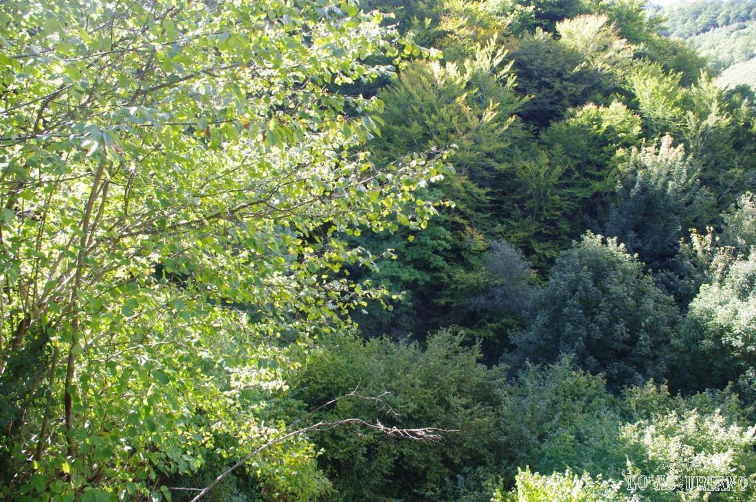 Esta es la flora predominante de las laderas del Teso Gordo: fresnos, castaños, robles, hayas, avellanos...