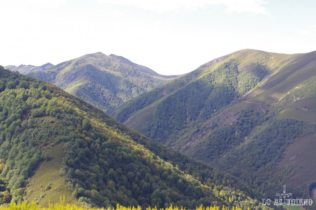 La parte baja del bosque de Muniellos, desde el mirador del Montecín, en Muniellos.