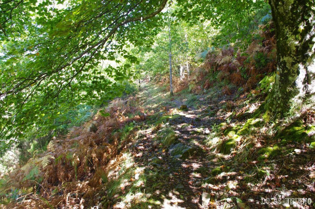 Viramos hacia el collau la Siella (o Siecha, según alguna guía) y en breve, desaparece el bosque de hayas.