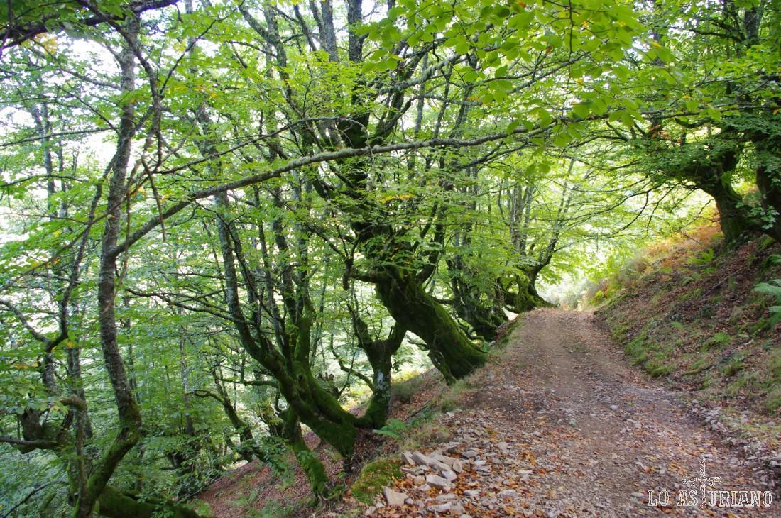 La senda es de nuevo preciosa. Te llevará unos 15 minutos pasar por esta senda, desde el Montecín hasta el collado de Moncó.