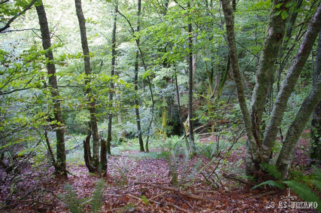 Ruta del bosque de Moal.