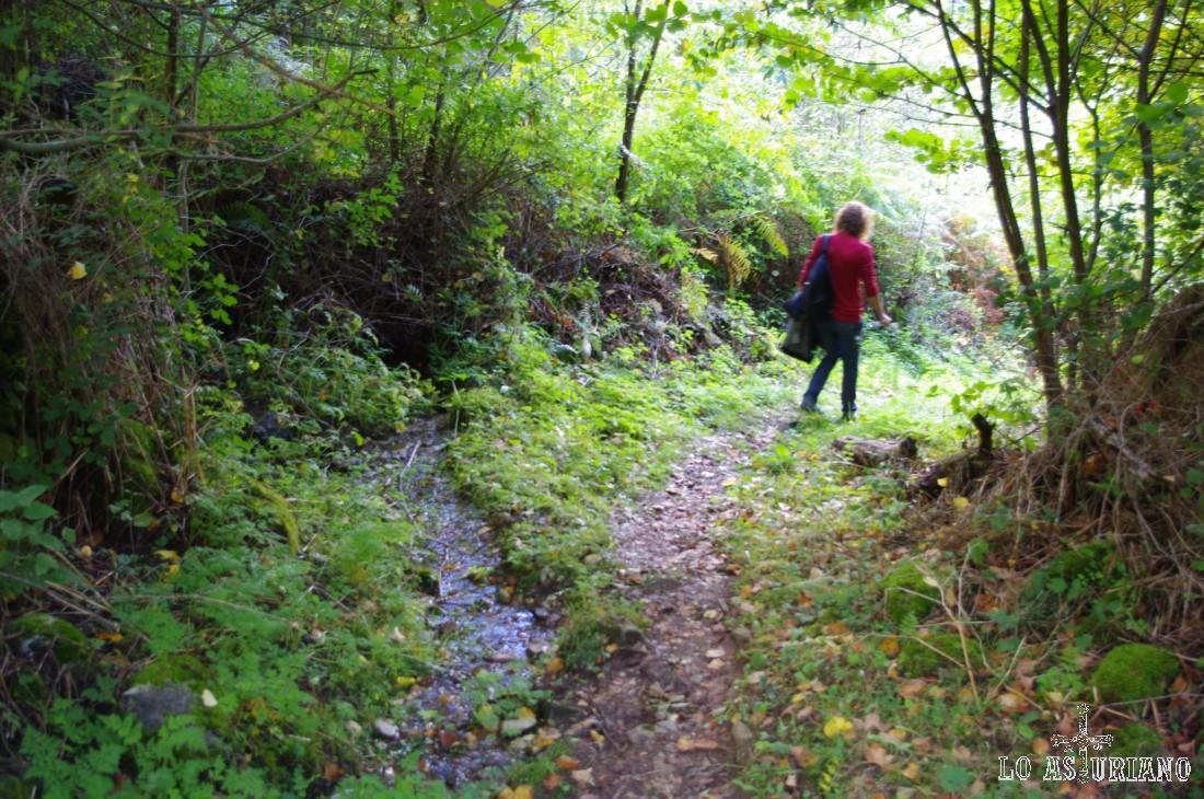 Entre el mirador del Montecín y la peña de Moncó, tienes esta senda que te lleva hasta el pueblo de Moal. Tanto de subida, como de bajada, forma parte de la ruta del bosque de Moal.
