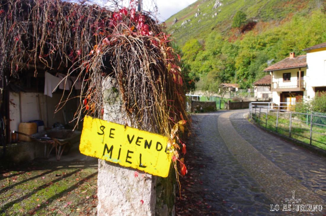 """""""Se vende miel""""... a 7 euros el bote, buenísima."""