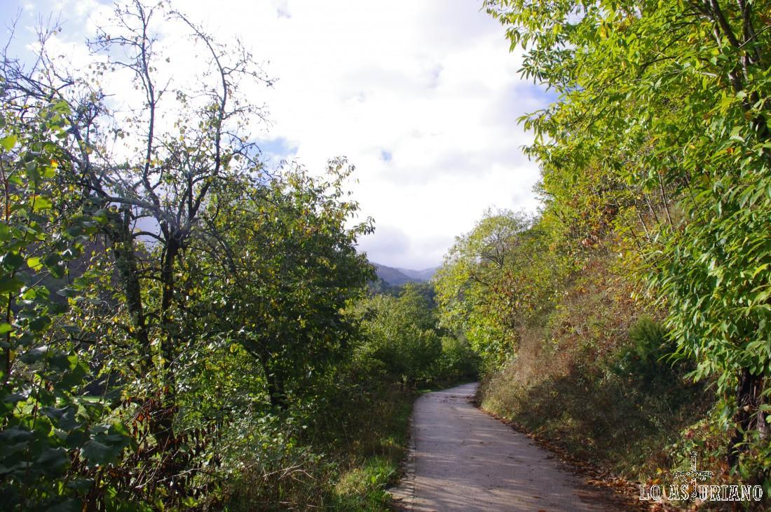 Los 3 primeros kilómetros de esta ruta del Alba se llevan a cabo por una estupenda pista cementada, con un escaso desnivel de subida.