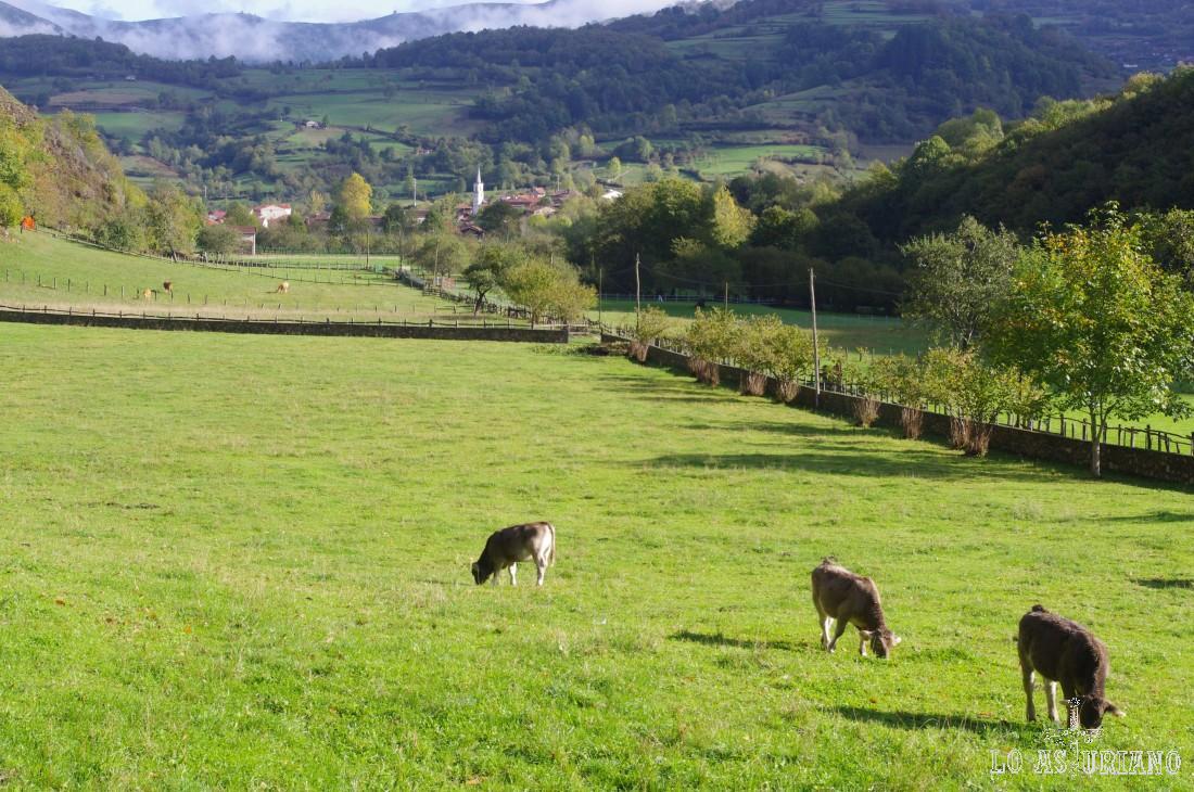 Pastos en el Alba