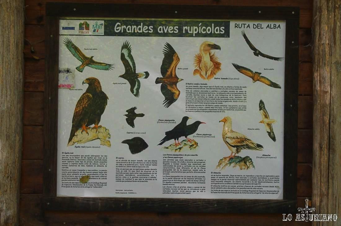 Grandes aves rupícolas de la zona. Recordemos que estamos en una Zona especial de protección de Aves (ZEPA).
