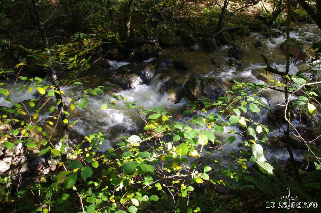 A veces, es posible ver truchas en el río.
