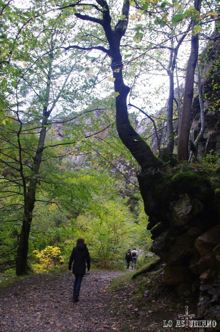 Normalmente, la ruta del Alba es una senda muy transcurrida, en Asturias, quizás únicamente por detrás de la concurridísima ruta del Cares (500.000 personas/año).