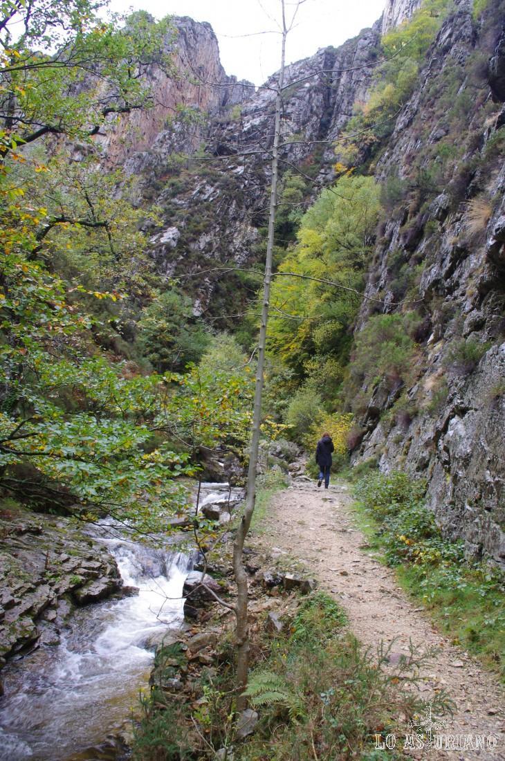 En este fantástico recorrido del Alba, predominan los avellanos entre el resto de las especies arbóreas.