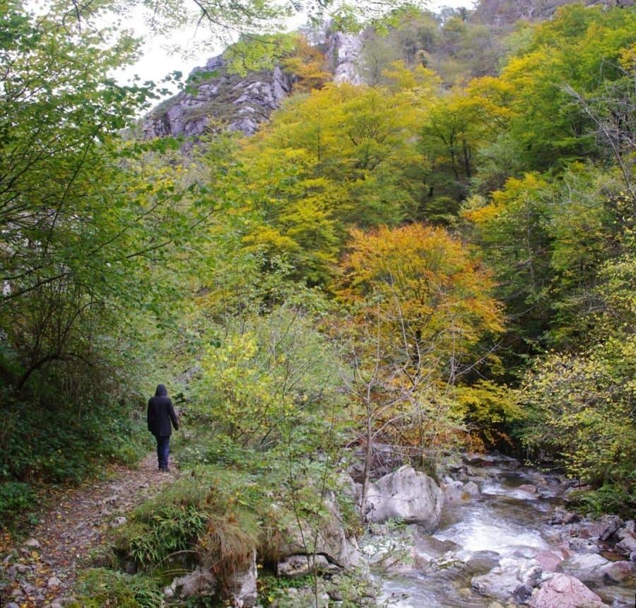 A ambos lados de la senda, crecen a duras penas, en fisuras y rellanos, ejemplares dispersos de haya, tejo, escuernacabras, mostajo, tilos o sauces. En otoño están espectaculares!