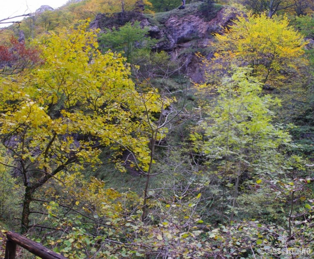 Verdes, grises, marrones, amarillos, rojos...: esos son los colores del otoño en el Alba.